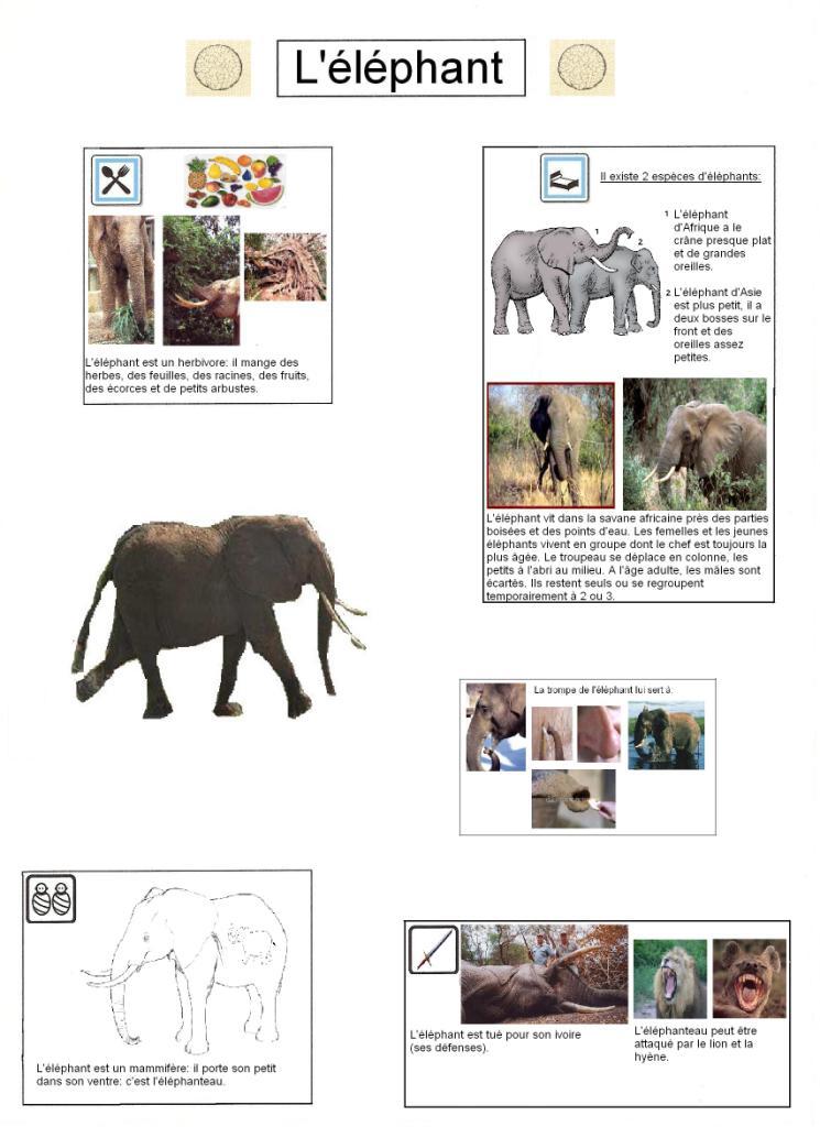 Projet autour de l 39 afrique - Animaux afrique maternelle ...