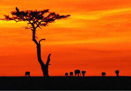 DES QUESTIONS IMPORTANTES... dans REFLEXIONS PERSONNELLES afrique